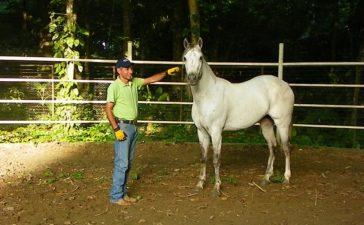 ¿Cómo amansar un caballo de la mejor manera?