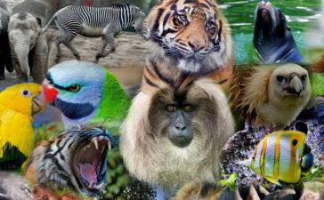 Curiosidades de animales que probablemente desconocías