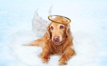 ¿Cómo enfrentar la muerte de una mascota?