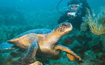 Fauna de las Islas Galápagos: Conoce la naturaleza de la región