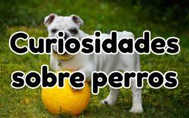 Las Mejores Curiosidades sobre perros