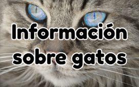 La Mejor Información Sobre Gatos