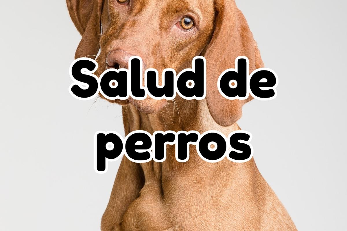 Información relacionada a la Salud de perros