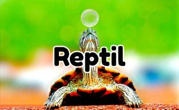 Información sobre el reptil