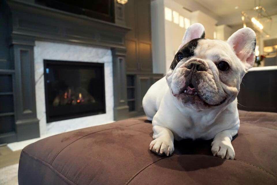 DogHero: Servicio Para Cuidar Perros En Casa y Ganar Dinero