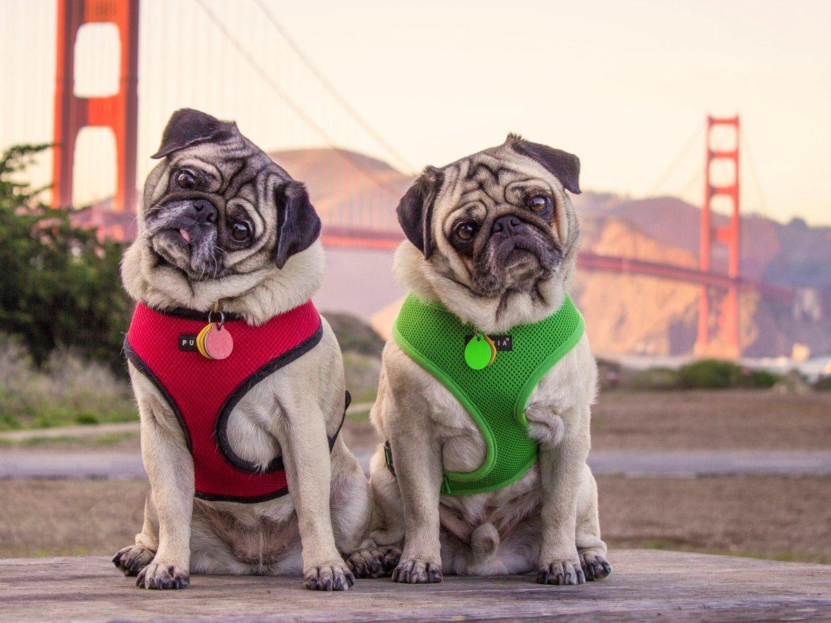 10 de los perros más famosos de Internet