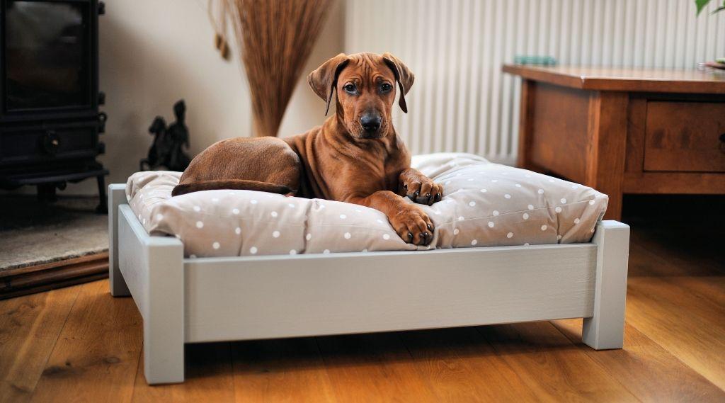apartamento con mascotas