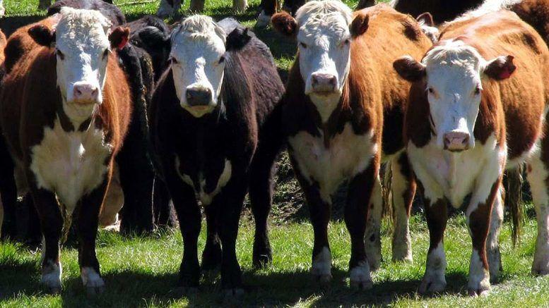 nombres para vacas bonitos