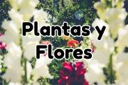 Plantas y Flores: Todo sobre jardines, cuidados y decoración