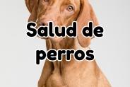Salud de perros: Consejos, cuidados e información útil