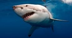Los diez animales más letales de todo el planeta